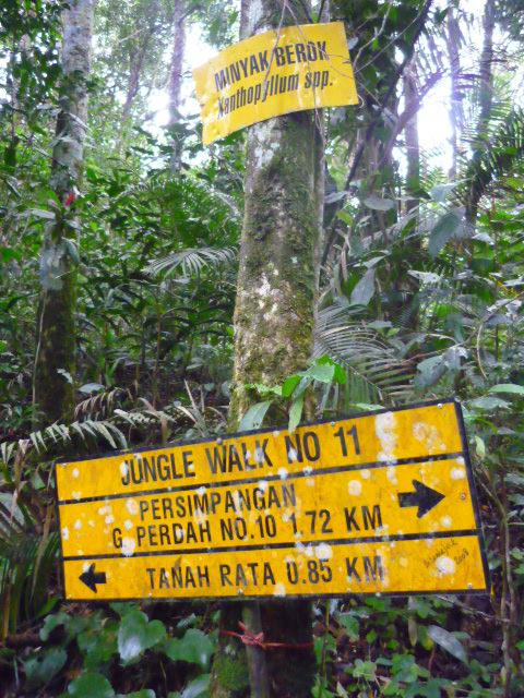One of very few signs helping us to lead our way through the trail in the Cameron Highlands
