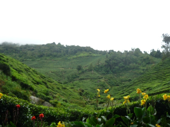7km walk uphill towards the Boh Tea Estate - oh, what wonderful views in the Cameron Highlands, Malaysia