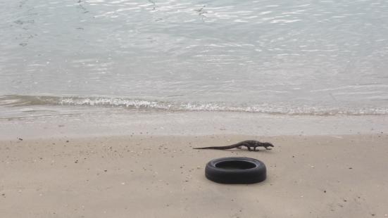 Reptiles on the sea in Langkawi, Malaysia