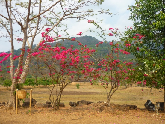 Natural surrounds of Wat Phu Champasak site in Laos