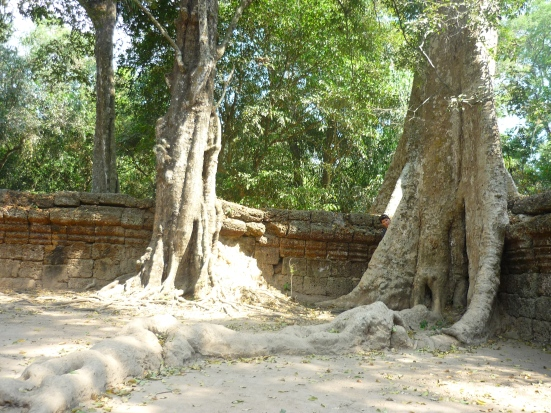 Where's Nico? Ta Prohm in Angkor near Siem Reap, Cambodia